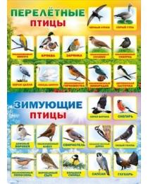 """Плакат """"Перелетные и зимующие птицы"""" 070.172"""
