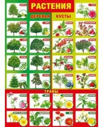 """Плакат """"Растения"""" 084.890"""