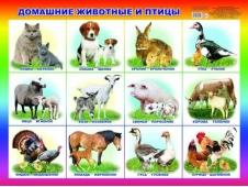 Плакат Карт.Домашние животные 0+