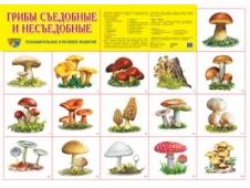 Дем.плакат Грибы съедобные и несъедобные А-2