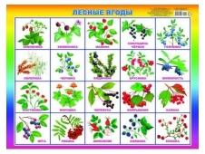 Плакат Карт. Лесные ягоды 00023 0+