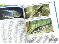 Подводный мир казантипского заповедника